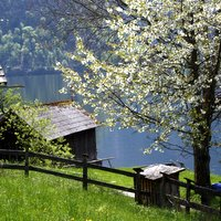 Lake, tree, hut and fence in spring - a classic